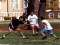 Webcams: Washington University in St. Louis
